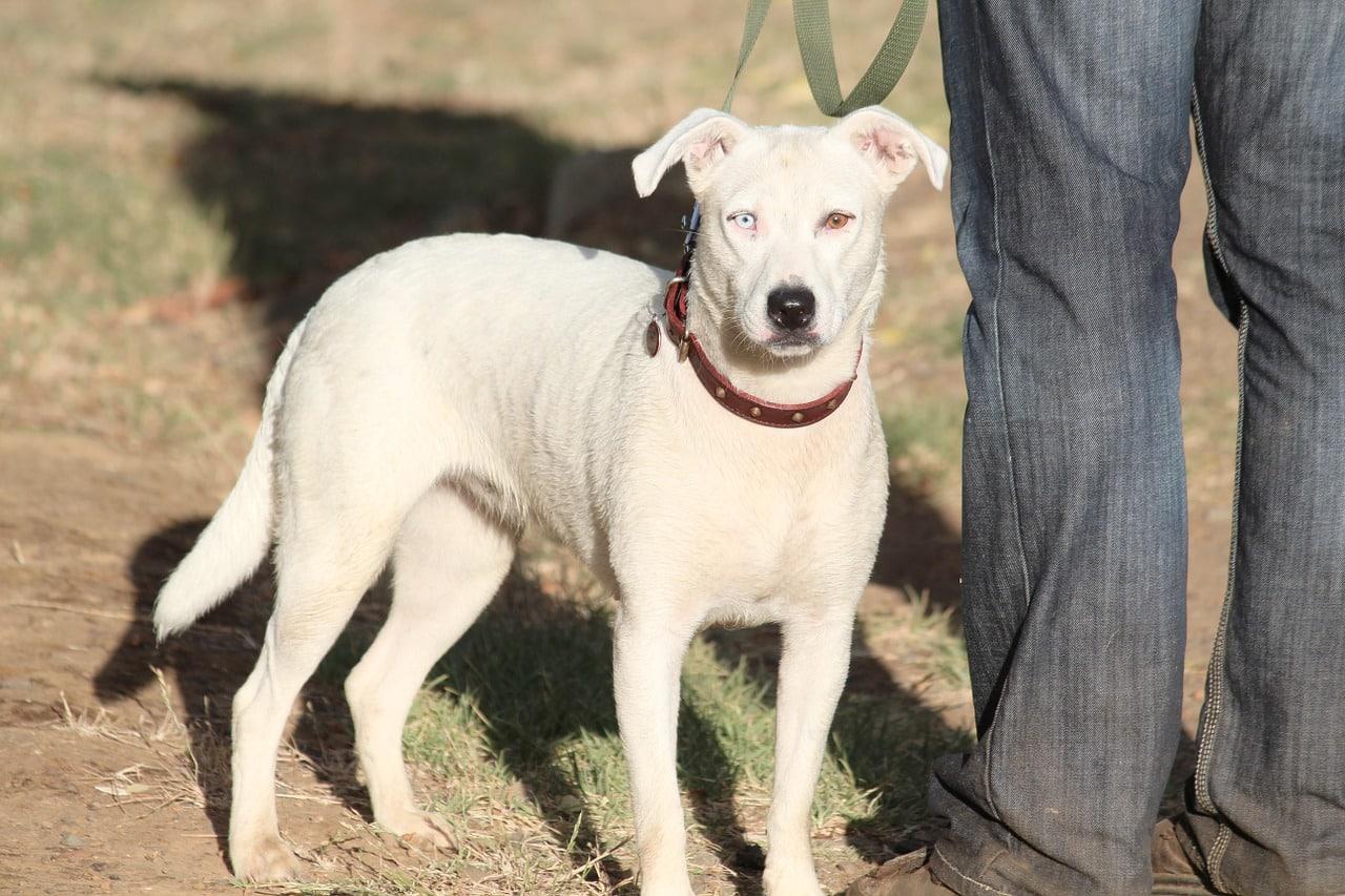 Spaceruj – Pomagaj! Akcja wspierania psów ze schroniska przez seniorów