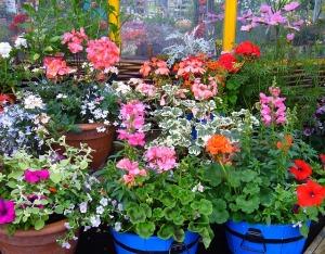 Stwórz miniaturowy ogród w donicy