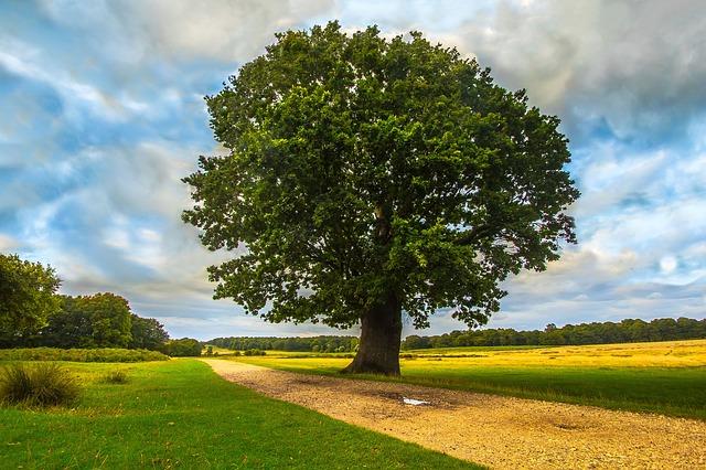 Drzewo Pokoleń – weź udział w konkursie!