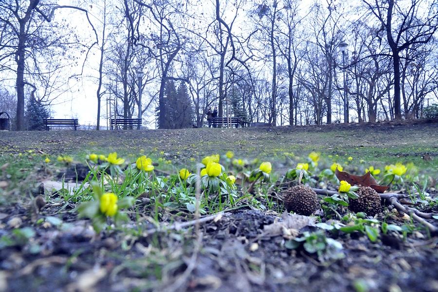 Wiosna – idzie czy już jest?