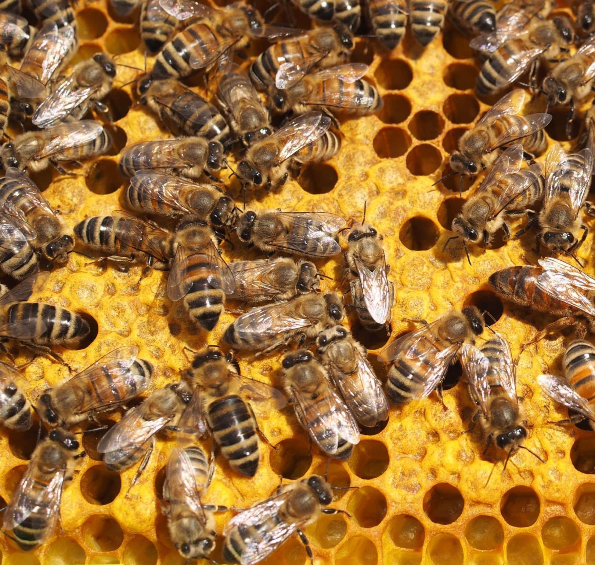 Pszczelarstwo – kursy w pasiece Ule Króla