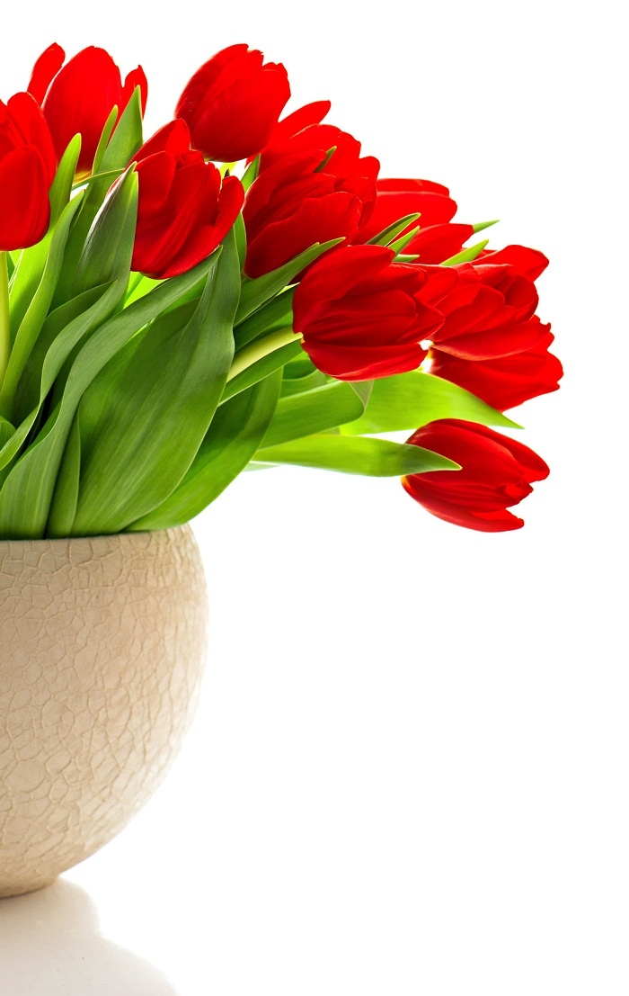 bouquet of red fresh spring tulip flowers