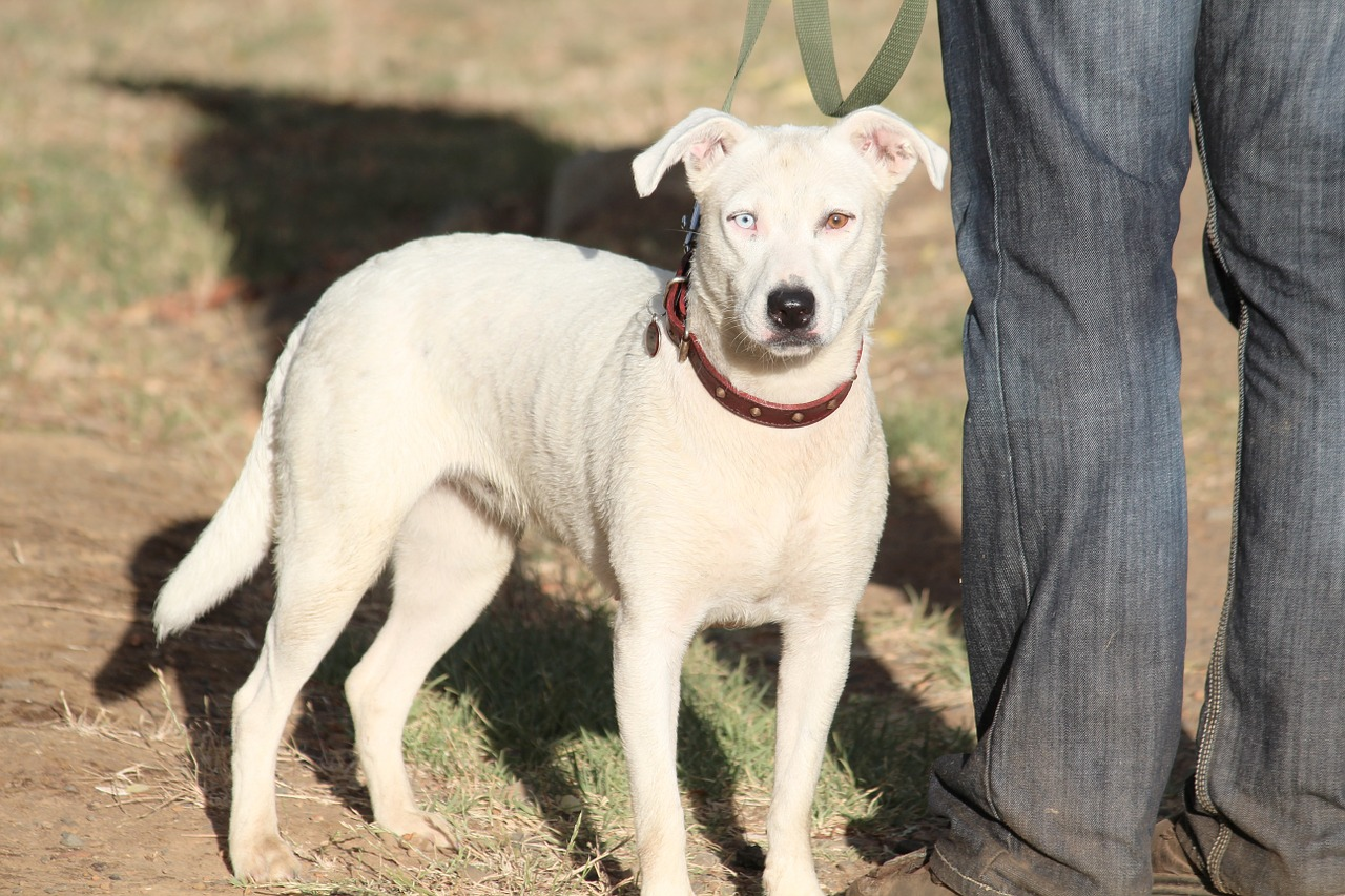 dog-574306_1280
