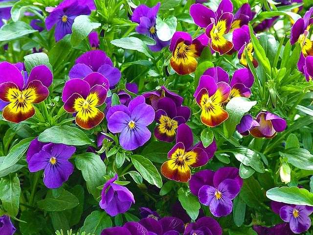 Wiosenny ogród, czyli jakie rośliny sadzimy w maju i w czerwcu