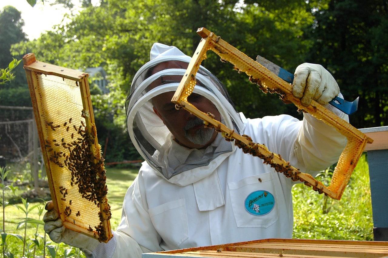 Życie pszczół nie płynie mlekiem i miodem…