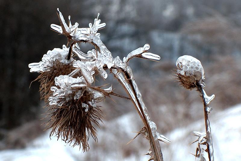 lodowe kwiaty