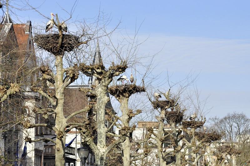 Strasburg – miasto nad rzeką Ill