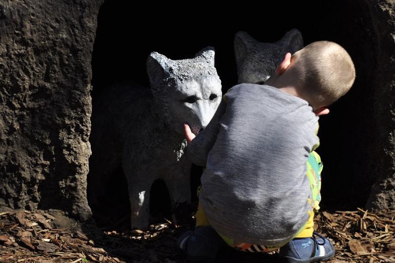 Wilcza Ostoja we wrocławskim ogrodzie zoologicznym