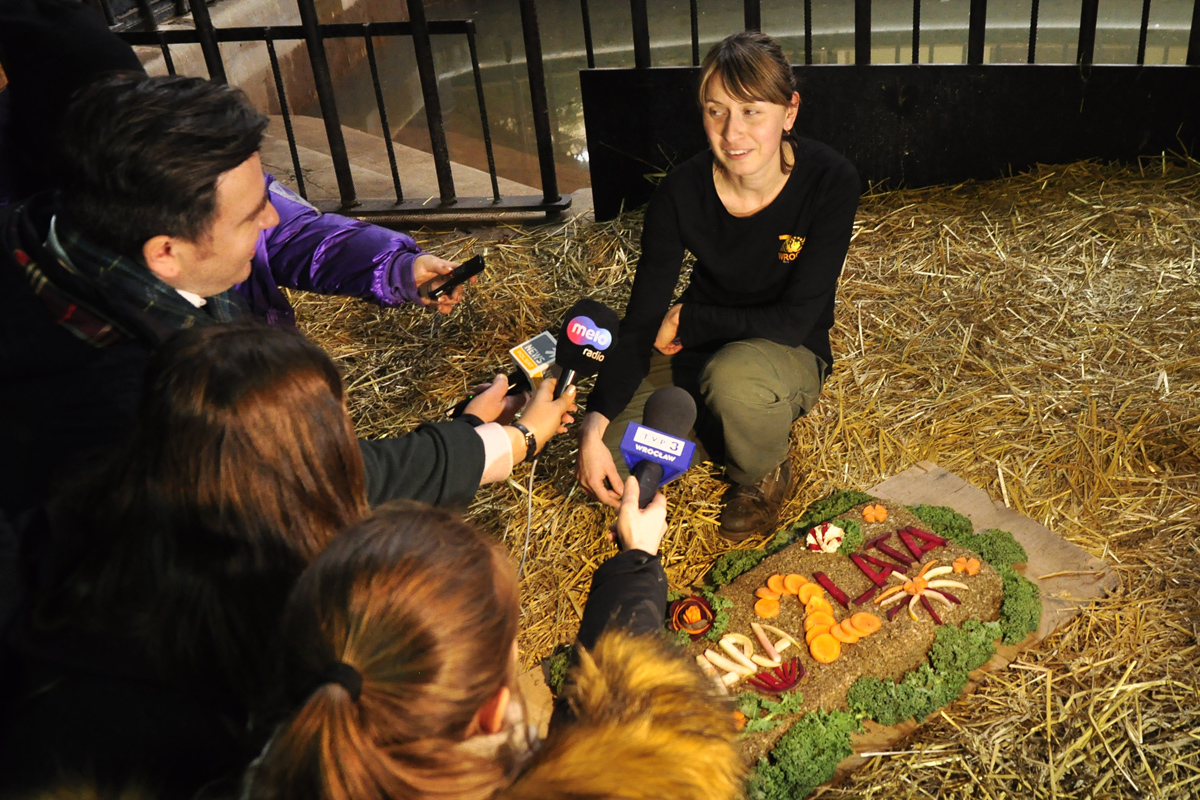 Mały tapir SARA obchodzi 2 urodziny (ZDJĘCIA). Co dalej z Sarą?