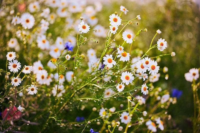Podarować swoje życie jak bukiet polnych kwiatów. Felieton Krystyny Ziętak