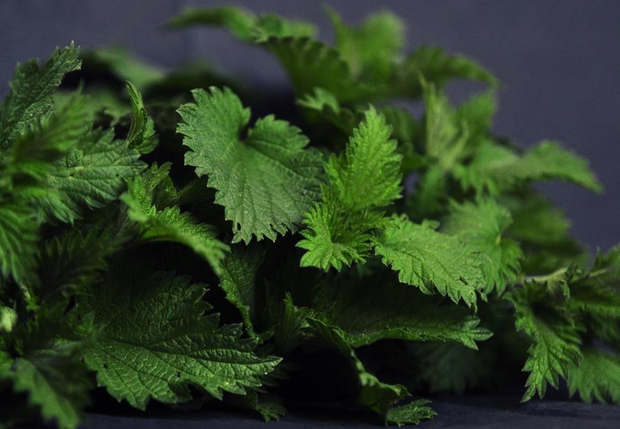 Zupa z pokrzyw i inne zielone chwasty na wiosnę. PRZEPIS. Zobacz, jak przygotować