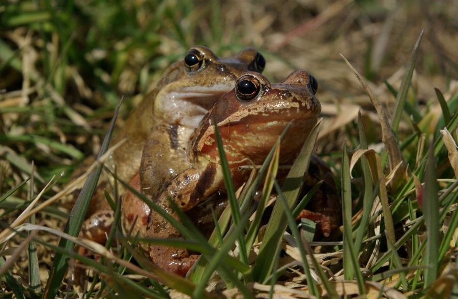 Śliczna jesteś żabko ma. Chcesz pomóc żabce?