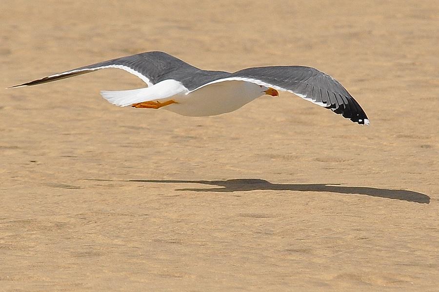 Światowy Dzień Ptaków Wędrownych