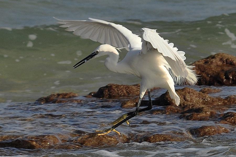 Rzadkie ptaki w Polsce. Też możesz pomóc je chronić